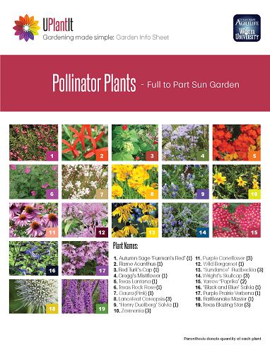 Page with 19 different pictures of plants