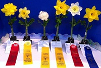 Texas Daffodil Society Flower Show Winners